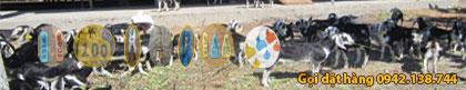 Kìm bấm thẻ tai - Thẻ tai đeo cho dê bò heo cừu... Liên hệ 0942.138.744
